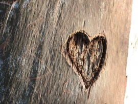 love_heart_carved_in_a_tree-t2